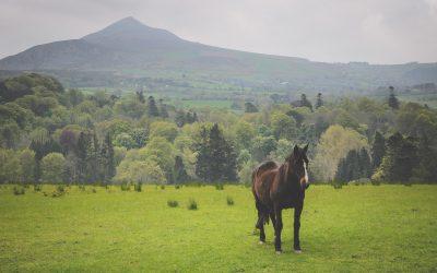 Vzpomínky na Irsko – část první