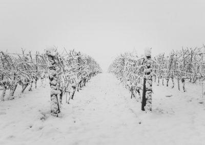 Vinohrady v zimě