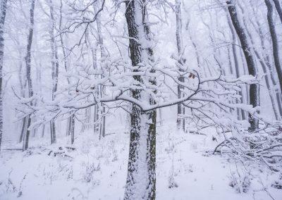 Vítr, zima, sníh, strom