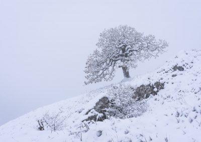 Pálavský strom